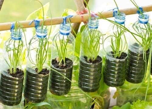 Weiterverwendung von Plastikflaschen als Blumenampel
