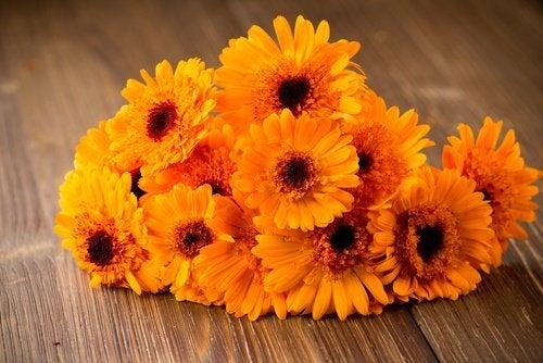 Blumen mit Zucker haltbar machen
