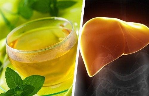 Ballast- und Bitterstoffe für eine gesunde Leber