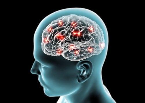 Gurken schützen das Gehirn