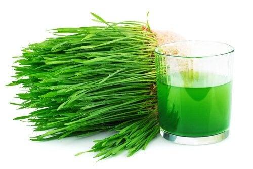 Chlorophyll kann für eine bessere Kalziumaufnahme