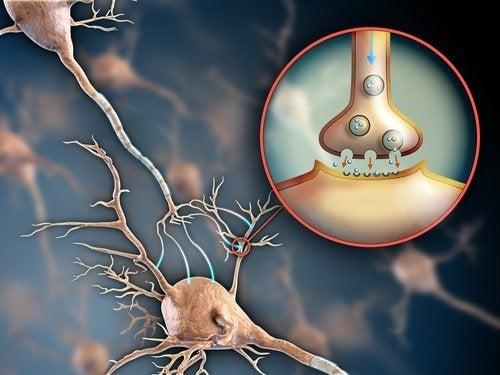 Nervensystem und Fibromyalgie
