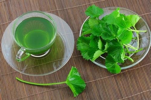 Petersilien-Tee für die Gesundheit der Nieren