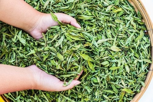 Stevia für einen ausgeglichenen Zuckerhaushalt