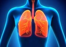 9-unentbehrliche-Lebensmittel-für-gesunde-Lungen