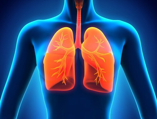 9 unentbehrliche Lebensmittel für gesunde Lungen