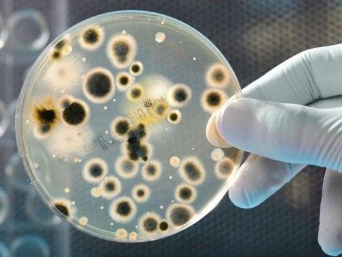 Bakterien und Juckreiz