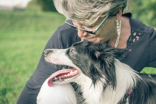 Hund und Glück