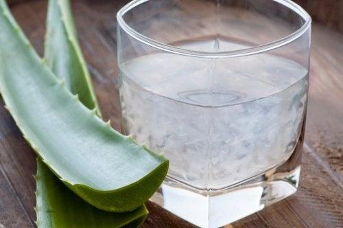 Aloe  für einen gesunden Dickdarm