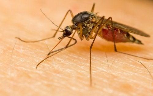 Warum sind manche Menschen besonders attraktiv für Stechmücken?