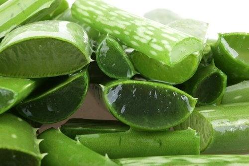 Aloe Vera für einen gesunden Magen