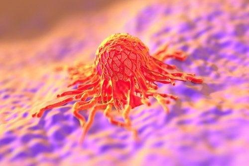 Papillomvirus im Itimbereich