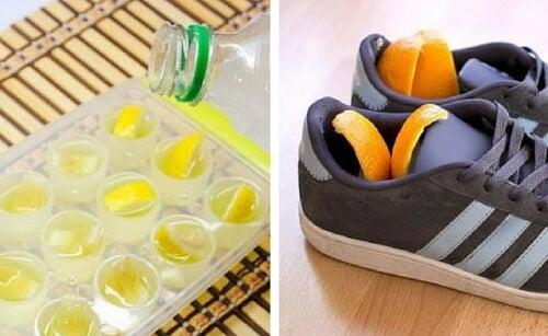 6 Verwendungsmöglichkeiten für die Schale von Zitrusfrüchten