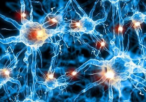 Lachs ist für Gehirnzellen wichtig