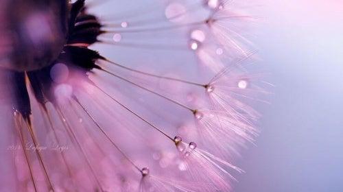 Pusteblume erinnert an vergangene Liebe