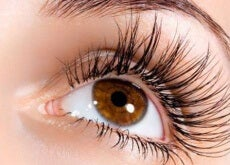 Detailaufnahme Auge mit Wimpern
