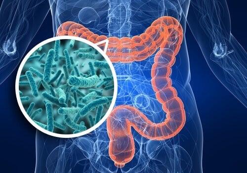 Darmbakterien mit Antibiotika behandeln