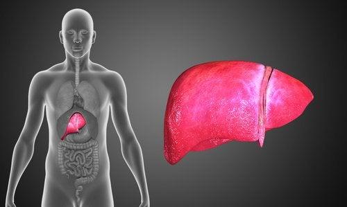 Symptome von Leberkrebs erkennen