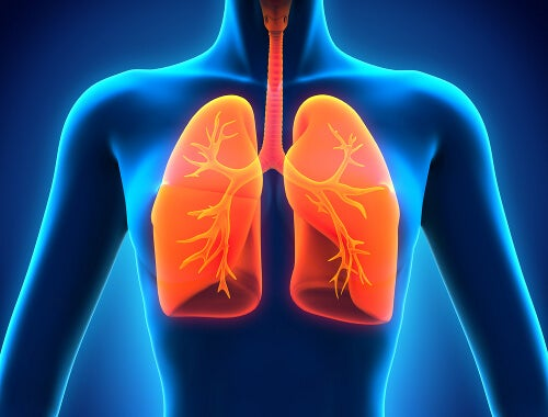 Niesen schützt die Lungen