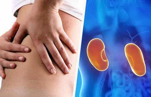 7 Tipps, wie du deine Nieren schützen kannst