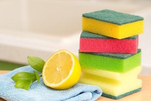 Desinfizieren mit der Zitronenschale
