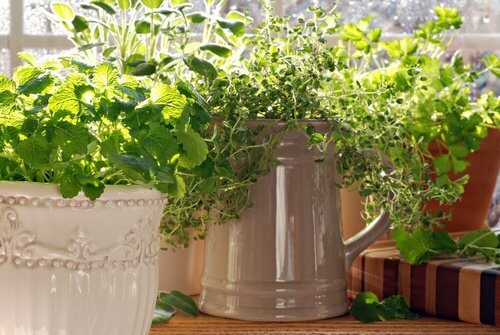 Zitronenthymian gegen Insekten