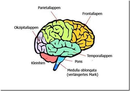 So funktioniert unser Gehirn
