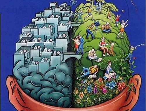 Abbildung der zwei Gehirnhälften