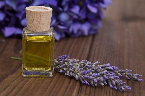 Lavendel als Tonikum