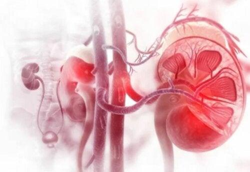 Nierenerkrankungen natürlich vorbeugen