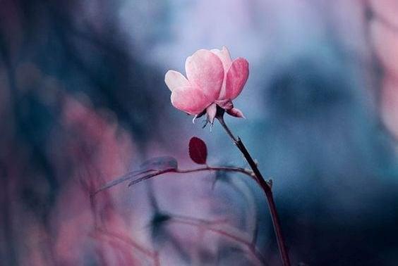 Ich liebe mich und schenke mir eine Blume.