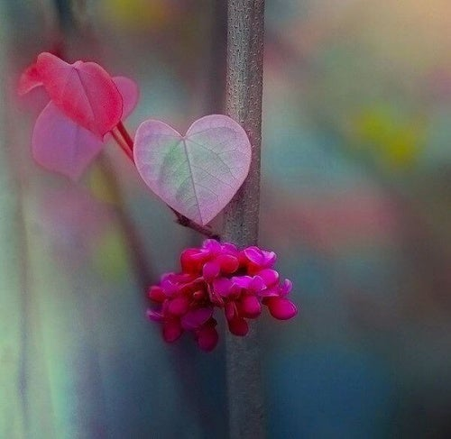 Blumen in Herzform symbolisieren innere Ruhe