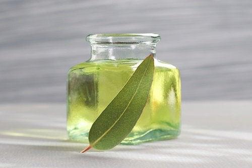 Eukalyptusöl um Insekten fernzuhalten