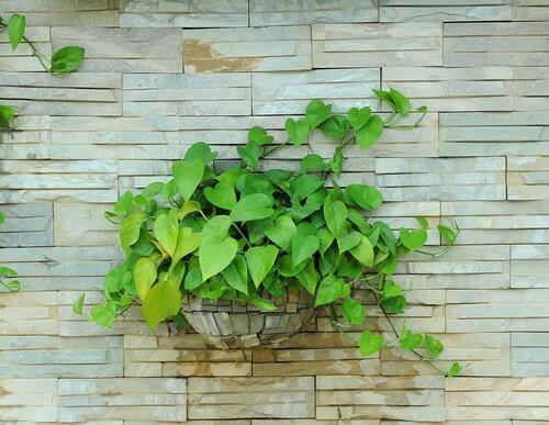 Pflanzen für eine gesunde Lunge