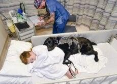 Therapiehund-Mahe-im-Krankenhaus