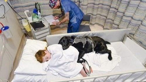 Mahe, der Therapiehund, der sich um seinen autistischen Freund kümmert