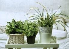 6-Pflanzen-für-das-Schlafzimmer