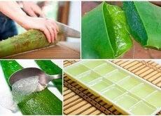 Aloe-Gel einfrieren
