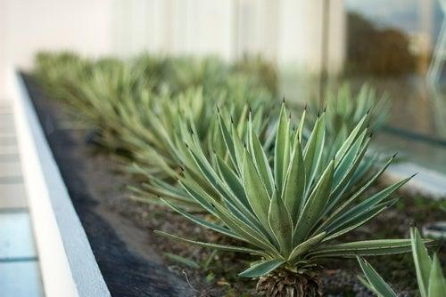 6 Pflanzen für das Schlafzimmer - Besser Gesund Leben