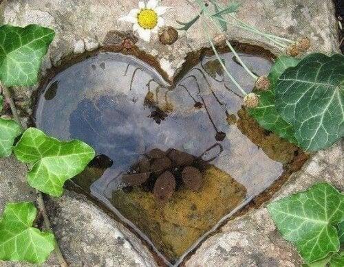 Natürliches Herz als Symbol für Freiheit