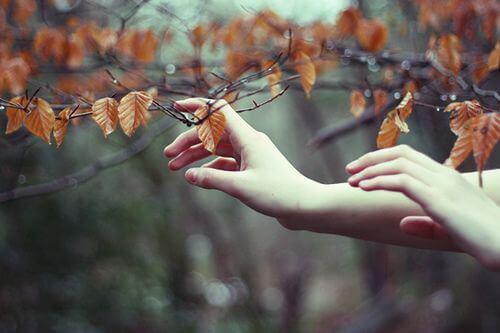 Hände berühren Laub