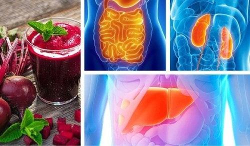 Lebenswichtige Organe entgiften