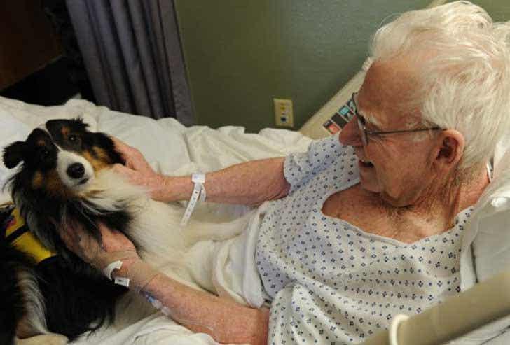 Krankenhaus, das Haustiere erlaubt