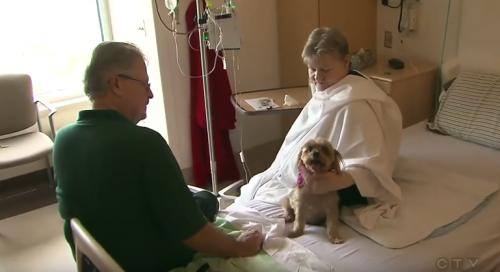 Wenn Haustiere erlaubt sind, genesen die Patienten schneller
