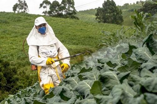 Pestizide gegen Plagen