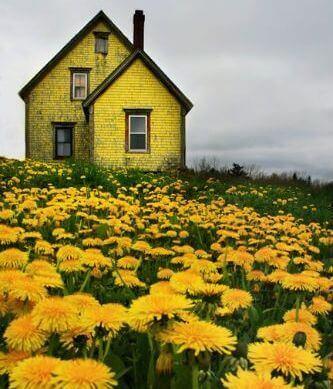 Gelbes-Haus