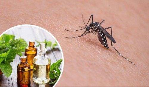 Die besten Mittel gegen Mücken
