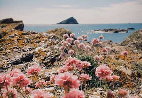 gütig sein und Landschaft am Meer betrachten