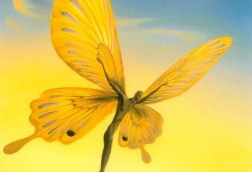 Schmetterlingsmann sucht eine Option