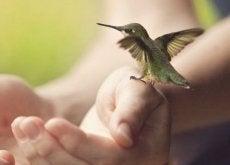 vogel-auf-der-hand-loslassen